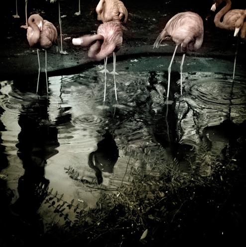 Immagine 11 REFLEXIONS MASTERCLASS   immaginari collettivi