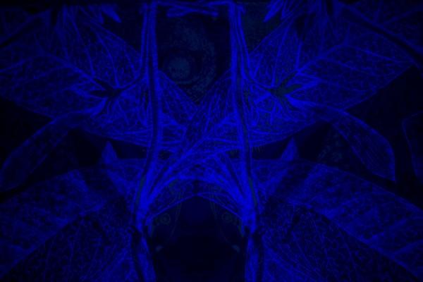 carnovsky Bestiario 17 600x400 CARNOVSKY   un mondo in tricromia