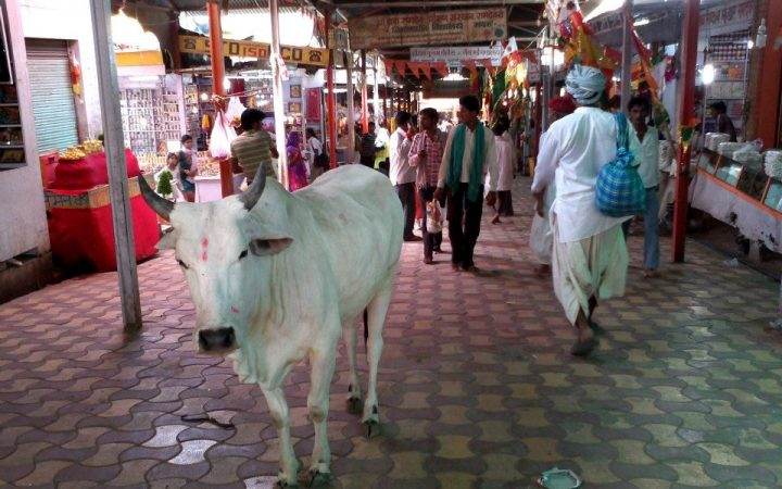 INCREDIBLE INDIA! - Rajasthan, Delhi, Agra e Varanasi 35