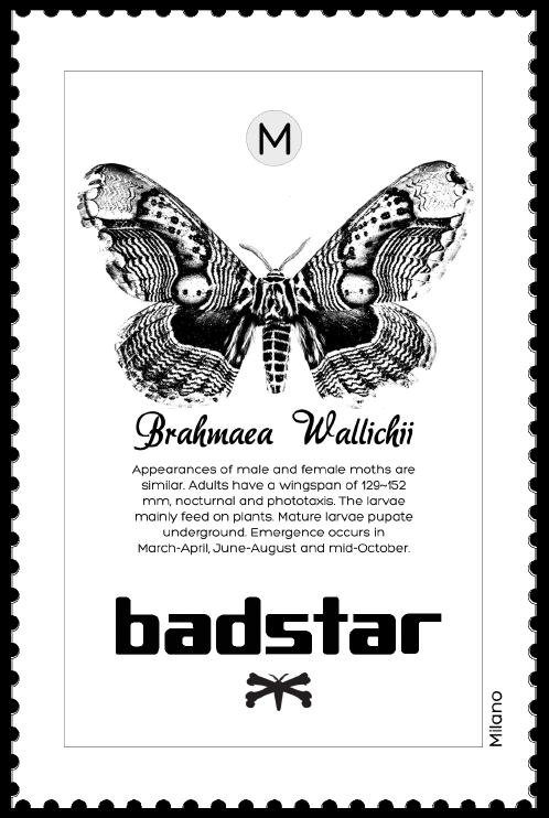 BADSTAR project by Putthikoon Penwan e Yu Wei Kuo Master in Visual Brand Design 2012 BASTARD & DOMUS ACADEMY   new graphics collection