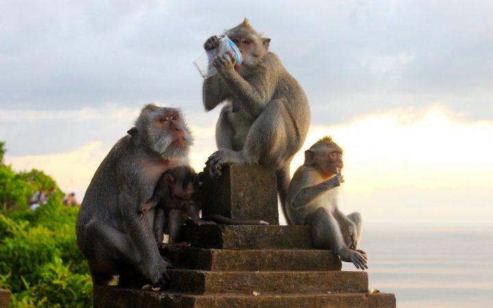 BALI - molto più di una guida turistica 35