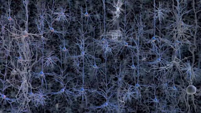 Schermata 2014 06 19 alle 15.00.42 640x361 HUMAN BRAIN PROJECT   simulare il cervello umano