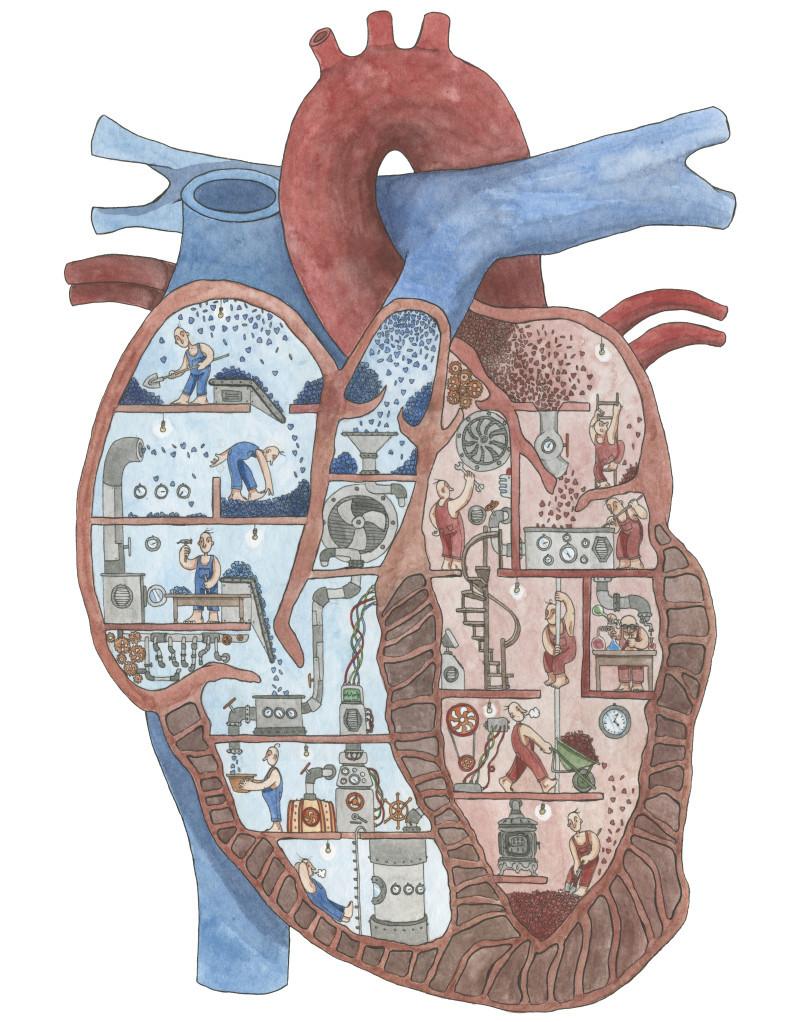 cuore sezionato grande e1427295491373 PIETRO NICOLAUCICH