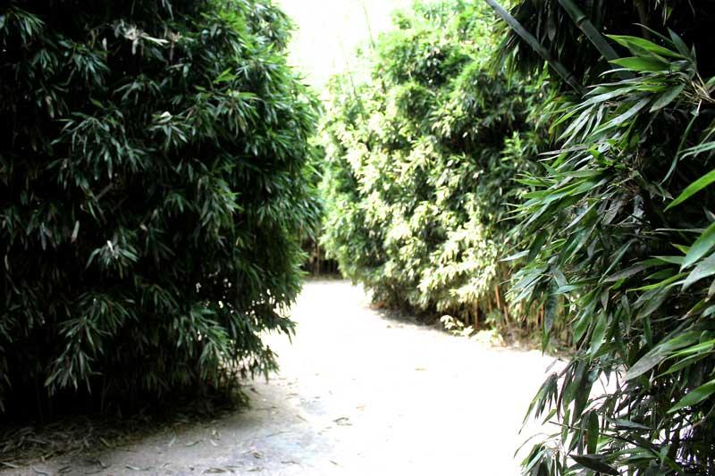 labirinto della masone fontanellato Il labirinto di Franco Maria Ricci