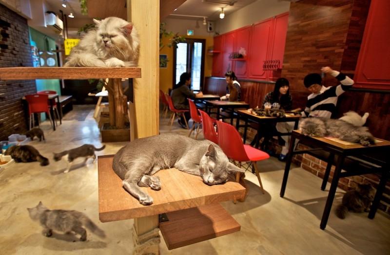 a cat cafe e1441124291891 CAT CAFE