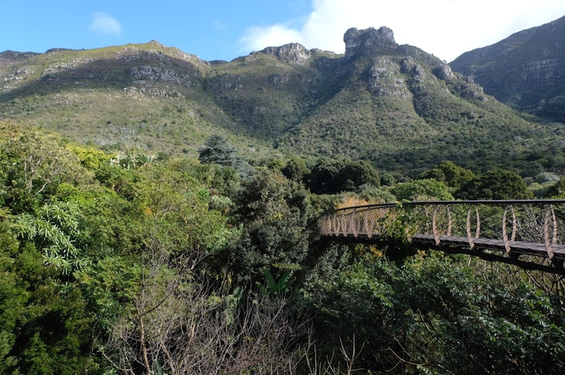Kirstenbosch Botanical garden 2 SUD AFRICA ON THE ROAD