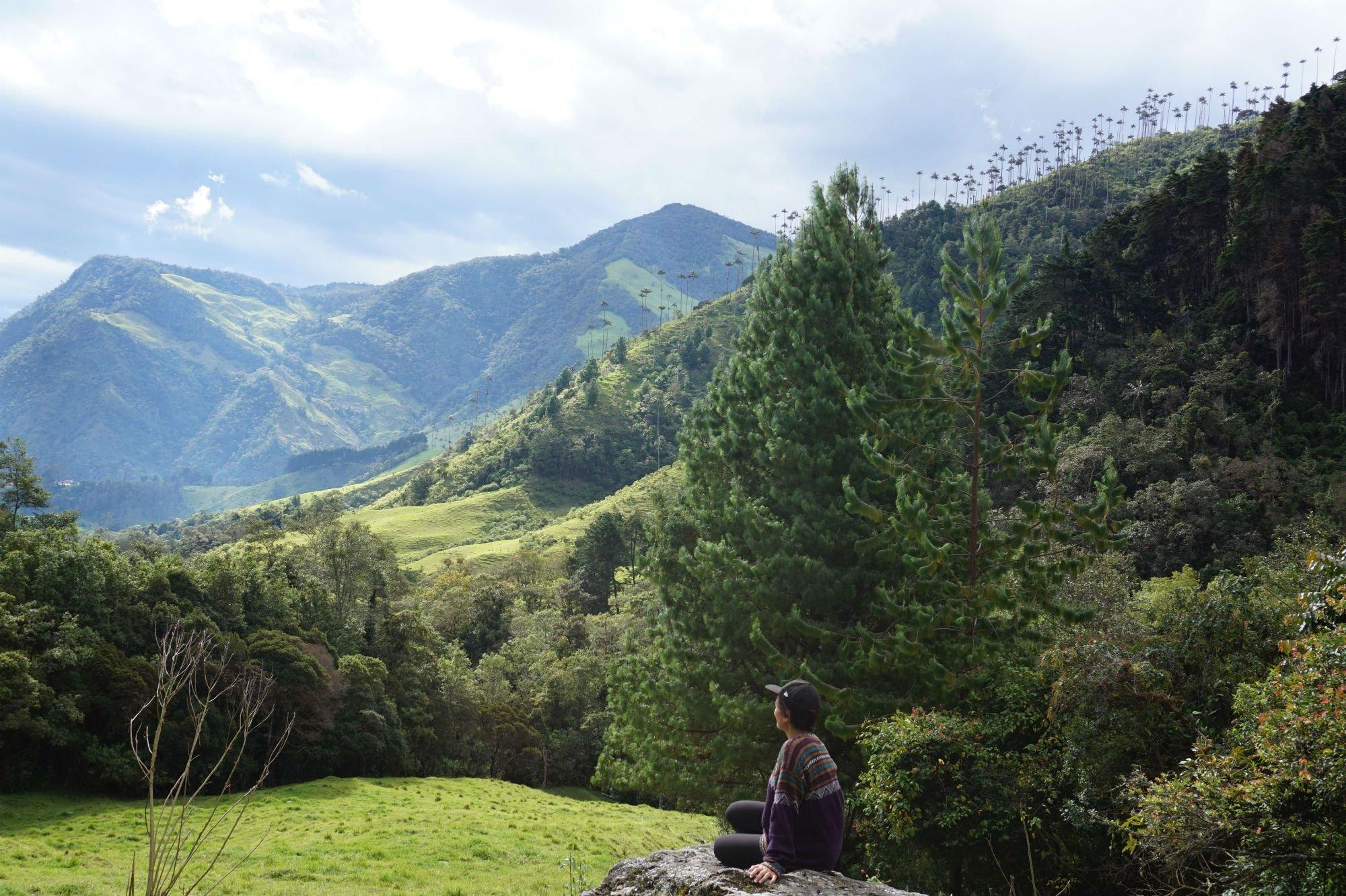 Valle di Cocora 1 compressor VIAGGIO IN COLOMBIA