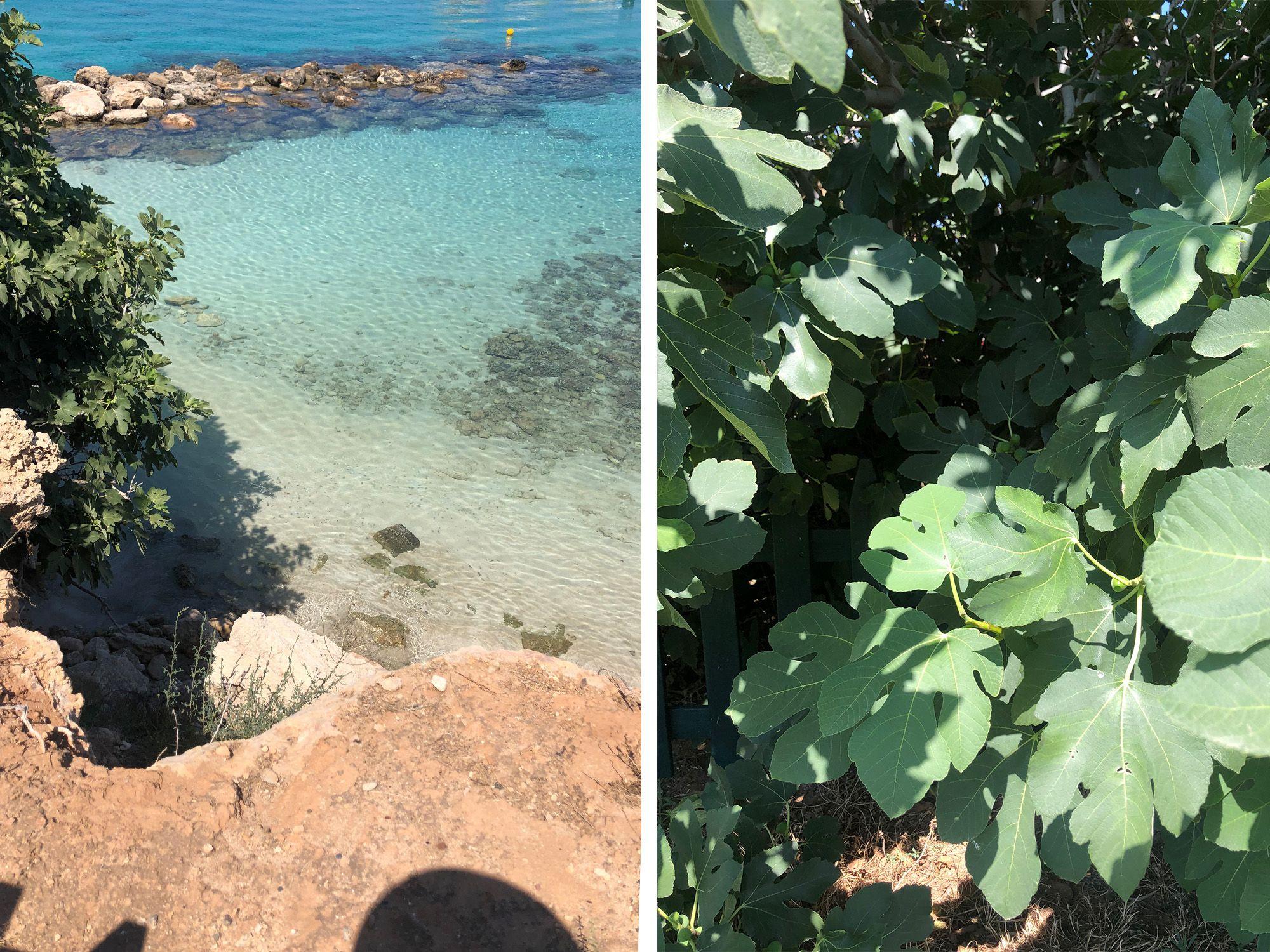 cyprus fig tree beach compressor WEEKEND A CIPRO