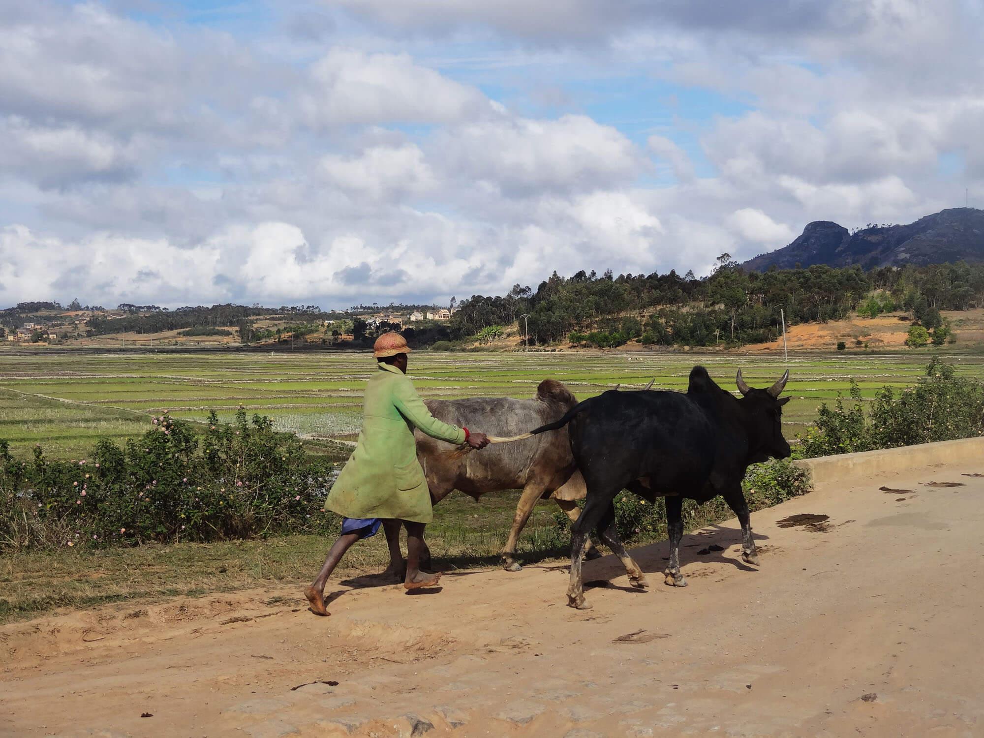 Mada011 VIAGGIO IN MADAGASCAR