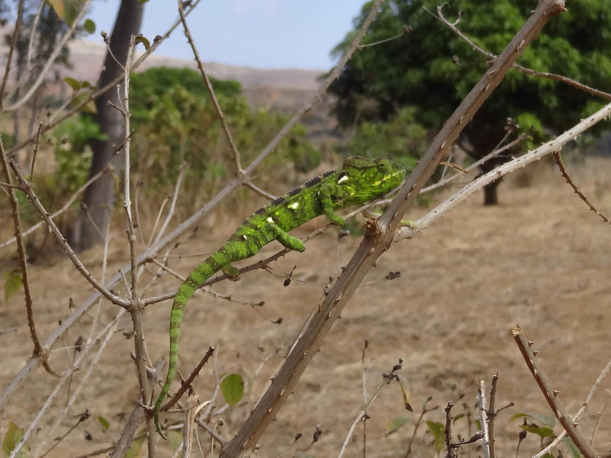 Mada017 VIAGGIO IN MADAGASCAR