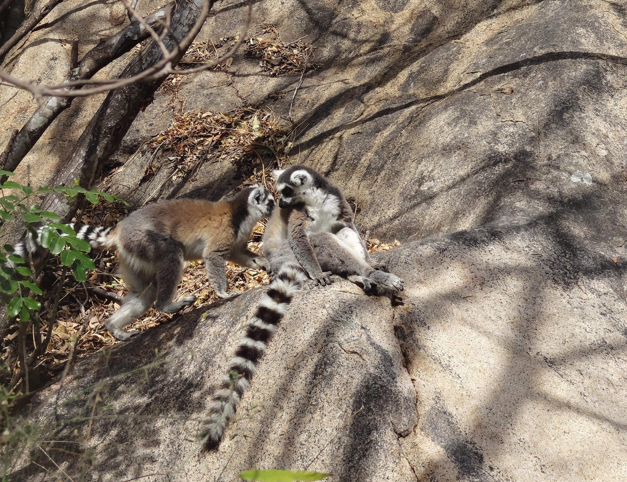 Mada018 VIAGGIO IN MADAGASCAR