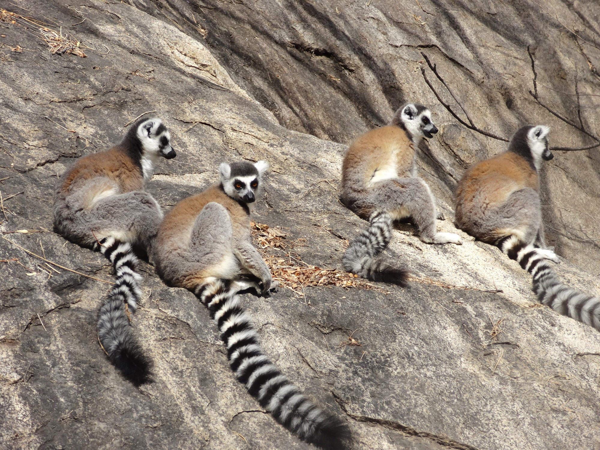 Mada019 VIAGGIO IN MADAGASCAR