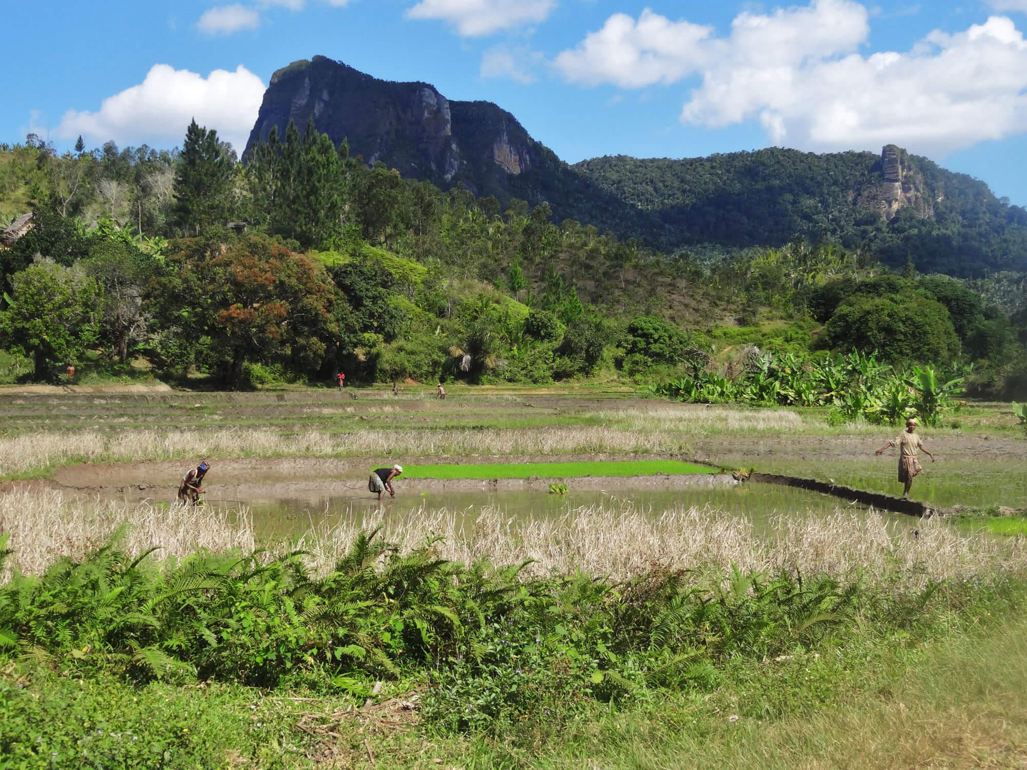 Mada025 VIAGGIO IN MADAGASCAR