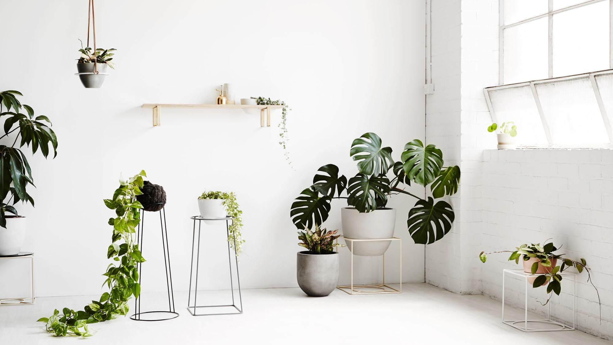 NONAGON style n9s indoor house plant green garden white eco SMARTWORKING E TEMPO LIBERO