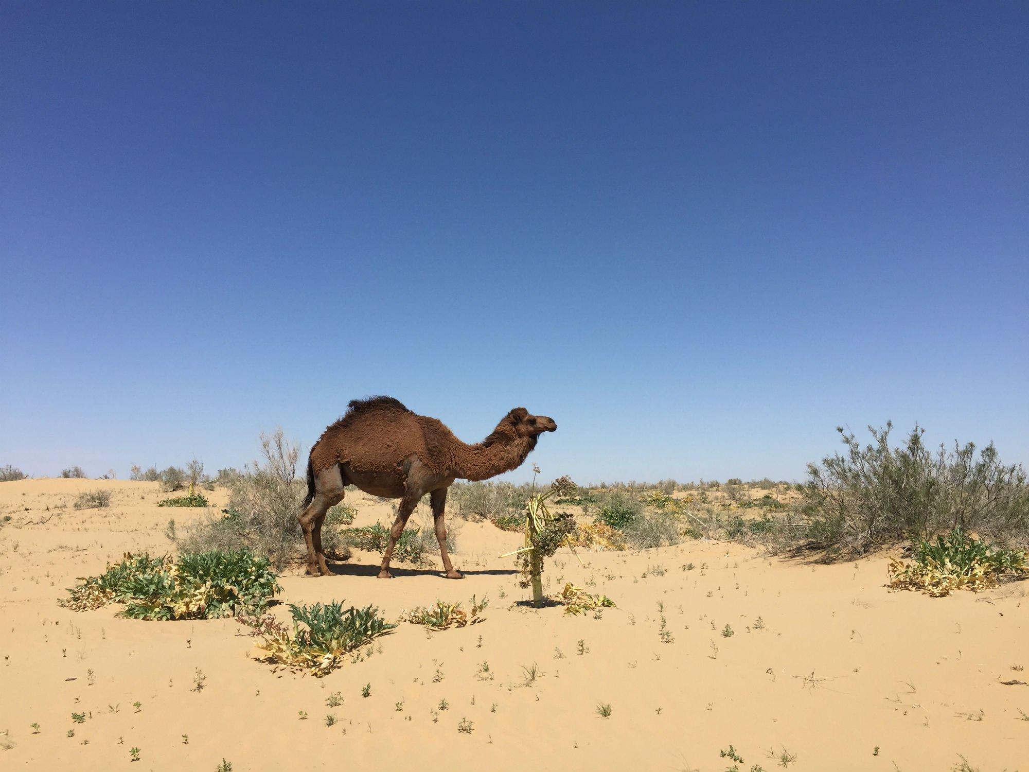 UZBEKISTAN Khiva fortezze nel deserto1 VIAGGIO IN UZBEKISTAN
