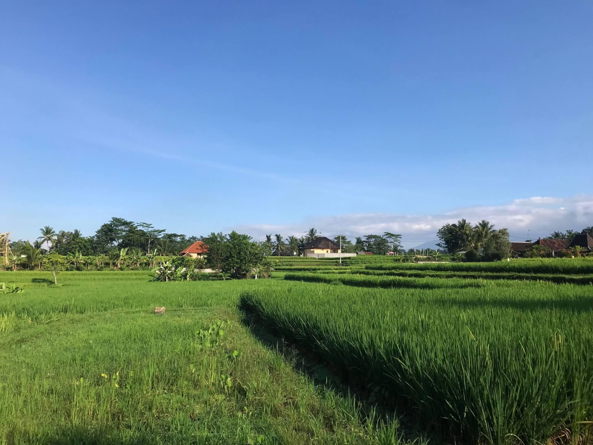Bali 13 1 scaled VIAGGIO A BALI