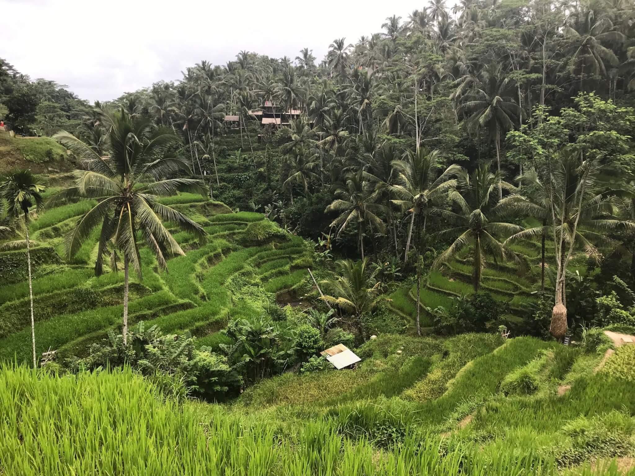 Bali 18 1 scaled VIAGGIO A BALI