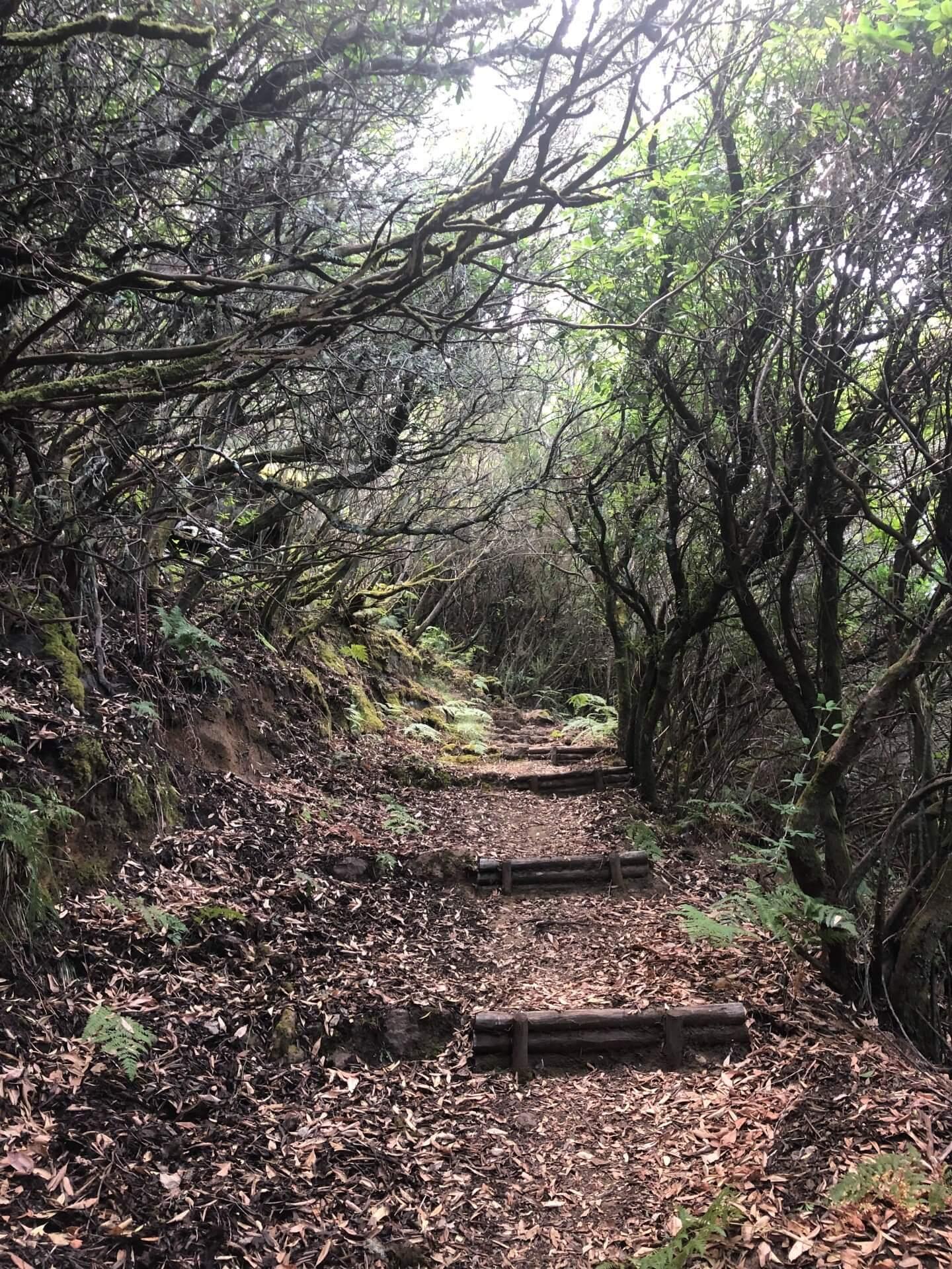Salina Monte Fossa delle Felci 2 ALLA SCOPERTA DI SALINA